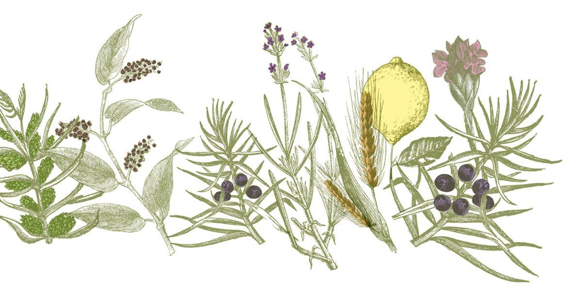 Der The Duke Gin wird aus 13 Botanicals handwerklich hergestellt