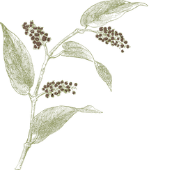 THE DUKE Botanicals Kubebenpfeffer
