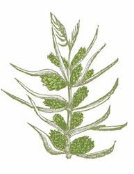 THE DUKE Botanicals Hopfenblüte