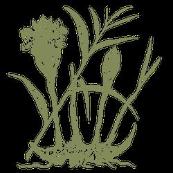 THE DUKE Botanicals Ingwerwurzel