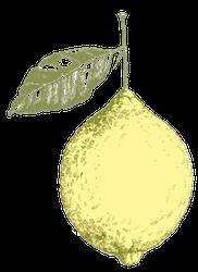 THE DUKE Botanicals Zitrone
